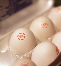 Eggland's Best Eggs: a nutrient dense food
